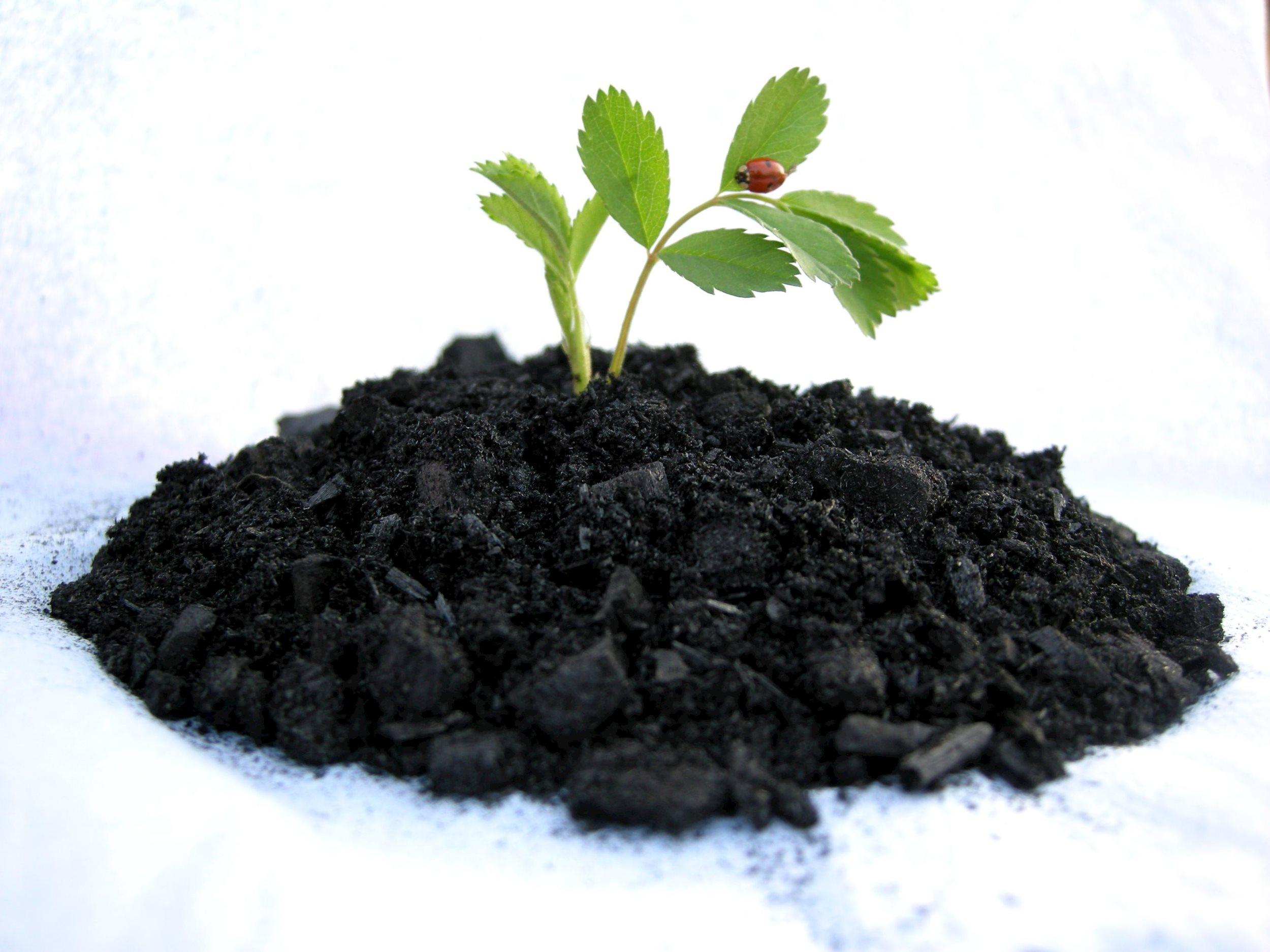 Lợi ích của than sinh học thân thiện với môi trường